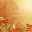 Постер, плакат: Осенний фон