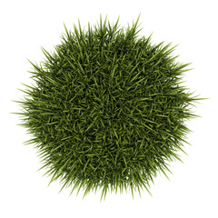 top view of decorative grass isolated on white background