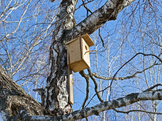 Birdhouse on the birch in early spring