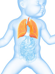 medical illustration showing the lung of a baby