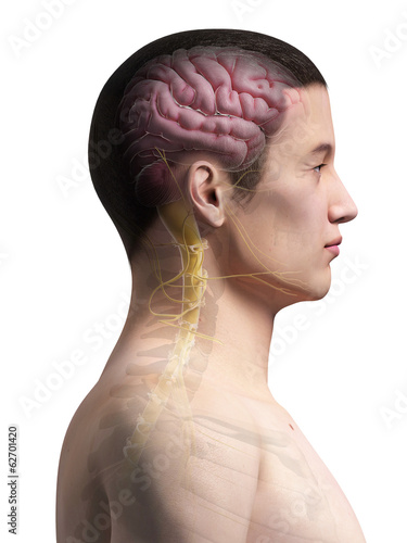 illustration of the brain of an asian male guy