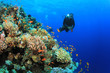Scuba diving on coral reef - 62702261