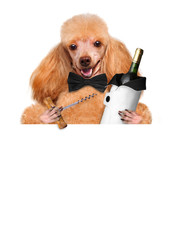 Dog with wine