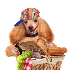 Dog with picnic basket