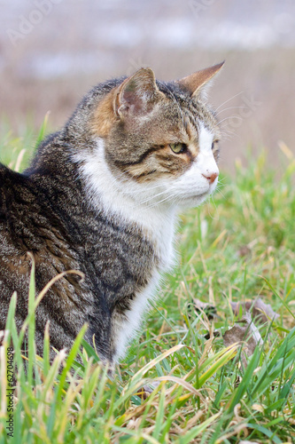 Cat in the grass 1