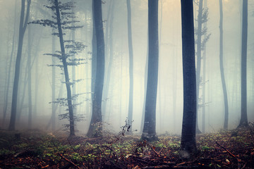 Mysterious forest scene
