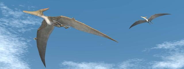 Pteranodon dinosaurs flying - 3D render