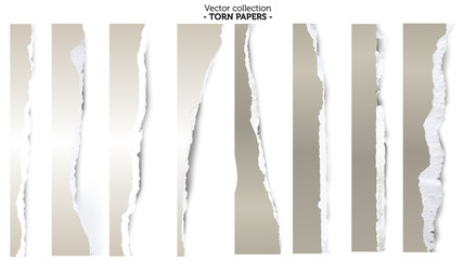 Collection of torn papers