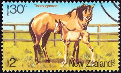 Thoroughbred horses (New Zealand 1984)