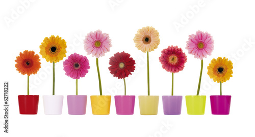 canvas print picture Bunte Gerbera Blumen in Übertöpfen