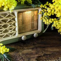 radio mimosa