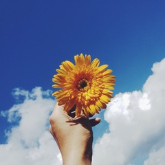Hand holding yellow cosmos flower intothe sky.