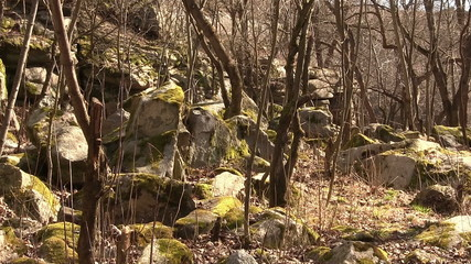 trees and boulders in spring. Landscape. Focus approach