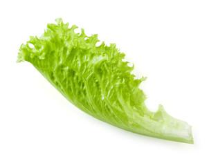Lettuce. Salad leaf isolated on white background