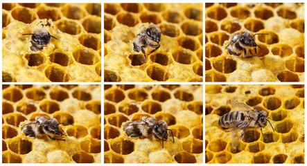 Birth bees