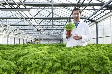 Deutschland, München, Wissenschaftler steht zwischen Petersilie Pflanze im Gewächshaus