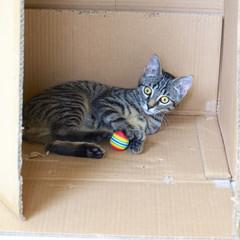 Kätzchen in einem Karton
