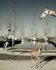 Wilde Tiere in der Stadt, Composite