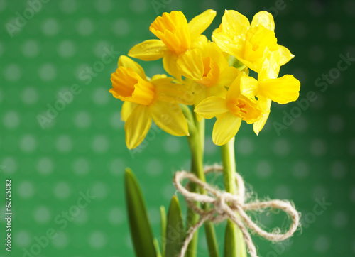 Beautiful narcissus on green background