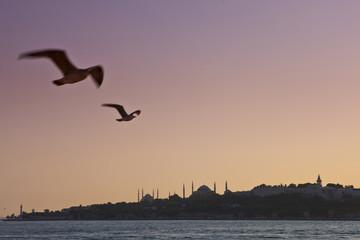 Türkei, Möwen fliegen im Himmel, die Blaue Moschee im Hintergrund