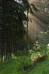 Österreich, Niederösterreich , Waldblick in der Nähe von Lohnbach