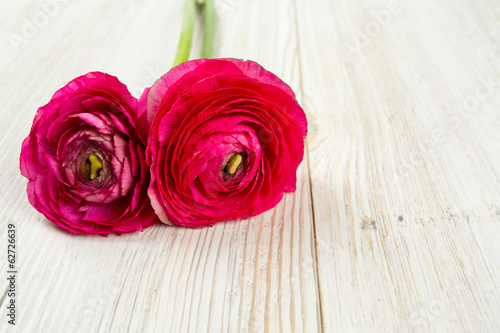 single pink ranunculus on wooden surface