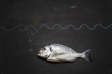 Fisch auf schwarzer Tafel