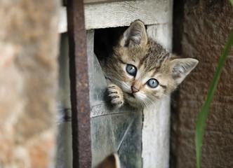Deutschland, Baden Württemberg, Kätzchen, schaut aus kaputtem Fenster