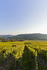 Deutschland, Saarland, Blick auf Weinberge