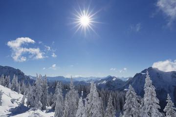 Deutschland, Bayern, Schnee bedeckte Fichten am Tegelberg