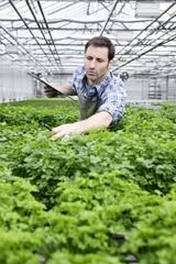 Deutschland, München, Mann Prüfung Petersilie Pflanzen im Gewächshaus