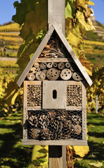 Deutschland, Sachsen, Radebeul, Insektenhaus vor der Weinberg