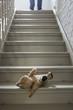 Teddybär auf Treppe