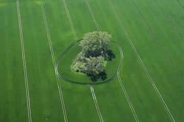 Deutschland, Ansicht der grünen Wiese und Baum in Harburg