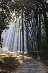 Indien, Uttarakhand, Waldblick mit Bäumen Shala bei Jim Corbett Nationalpark