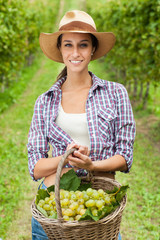 Young woman holding grapes in a basket in a vineyard.