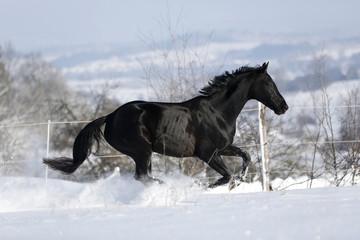 Deutschland, Baden-Württemberg, Pferd läuft im Schnee