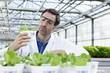 Deutschland, München, Wissenschaftler im Gewächshaus untersucht Feldsalat Pflanzen