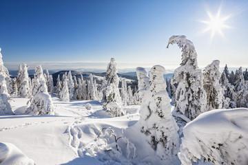 Deutschland, Bayern, Blick auf schneebedeckte Bäume am Bayerischen Wald