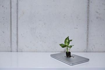 Deutschland, Köln, Pflanze mit Laptop auf dem Regal