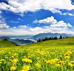 Pusteblumen vor Schweizer See: Grenzenlose Entspannung :)