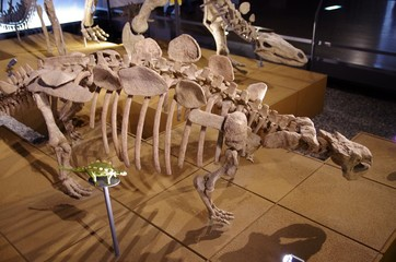 恐竜の全身骨格