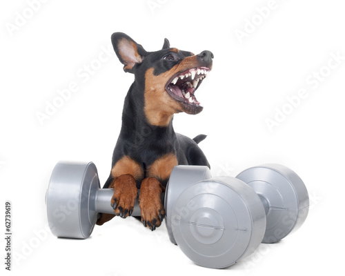 Sports pinscher