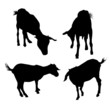Goat silhouettes-vector
