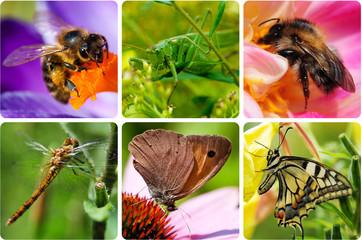 Insekten - Collage