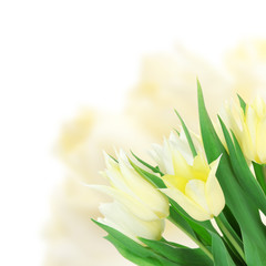 Beautiful yellow tulips on bright background
