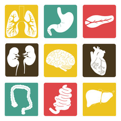 Icons of internal organs 2