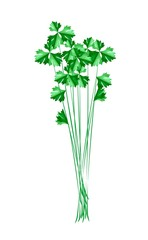 Fresh Green Chinese Celery on White Background