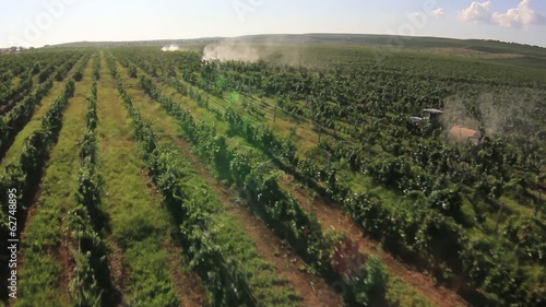 Tractor spraying rows of grape field. Aerial shot.