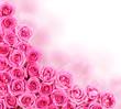 Hot Pink Roses over white background. Border
